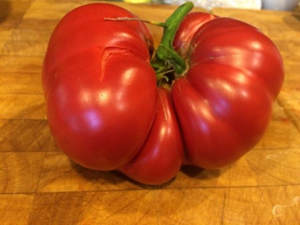 1.3 lb tomato front view