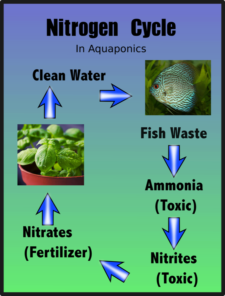 font view aquaponics info graphic